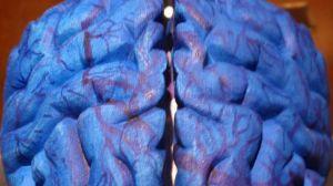 infantiles-generar-alteraciones-fisicas-cerebro_TINIMA20130115_1080_5